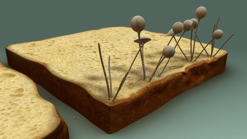hongos stock de ilustración
