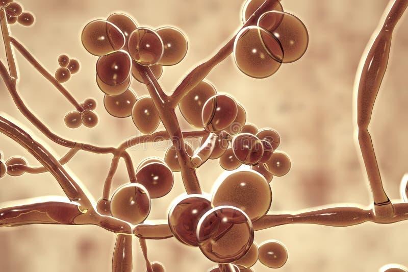 Hongos de los auris de la candida, hongo resistente emergente del multidrug stock de ilustración