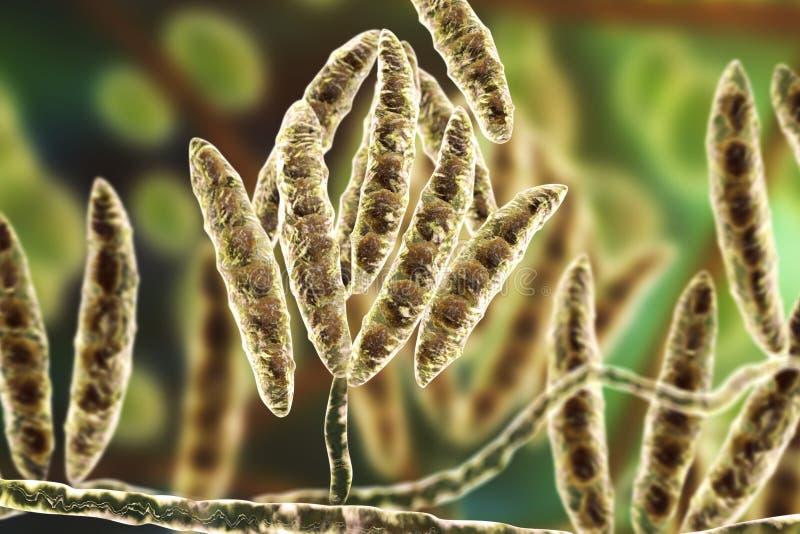 Hongos Fusarium que producen micotoxinas libre illustration