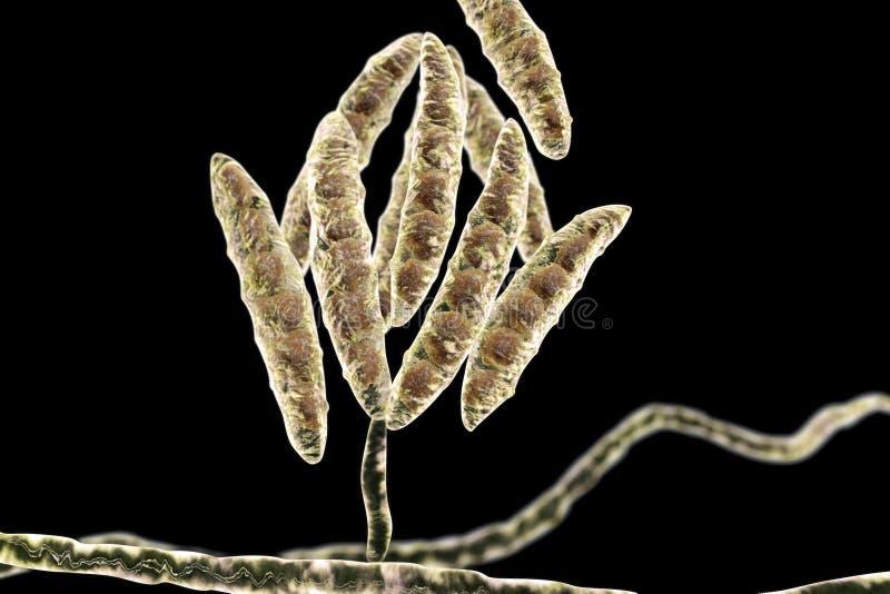 Hongos Fusarium que producen micotoxinas stock de ilustración