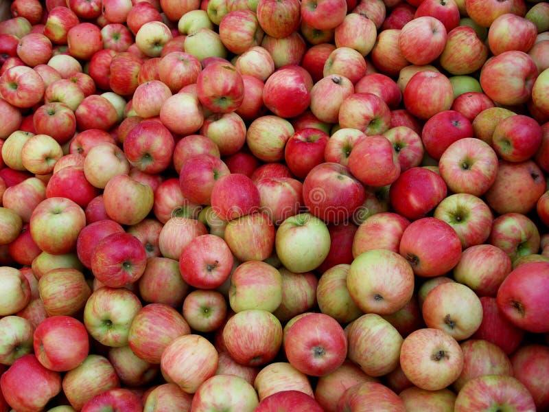 Honig-Chipslette-Äpfel stockfotos