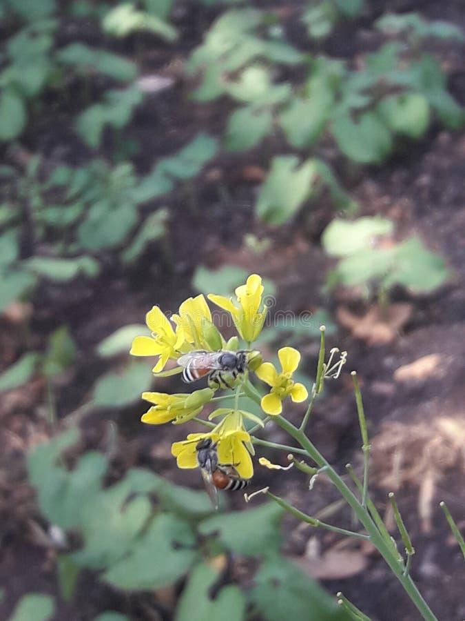 Honigbiene und Blumen und schöne Natur stockfoto