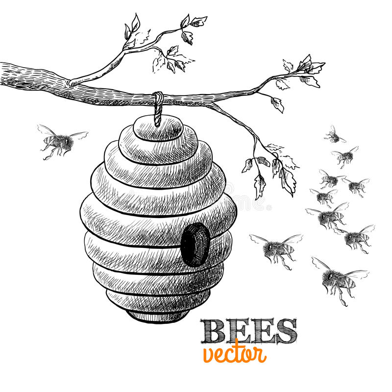 Honigbienen und -bienenstock auf Baumast lizenzfreie abbildung