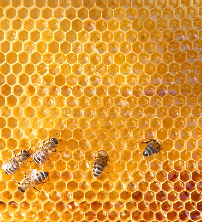 Honigzellen und -bienen lizenzfreie stockfotografie