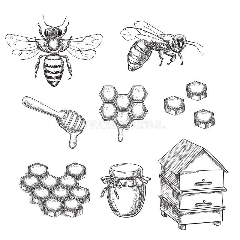 Honing en bijenschets vectorillustratie Honingraten, pot en bijenkorfhand getrokken geïsoleerde ontwerpelementen stock illustratie