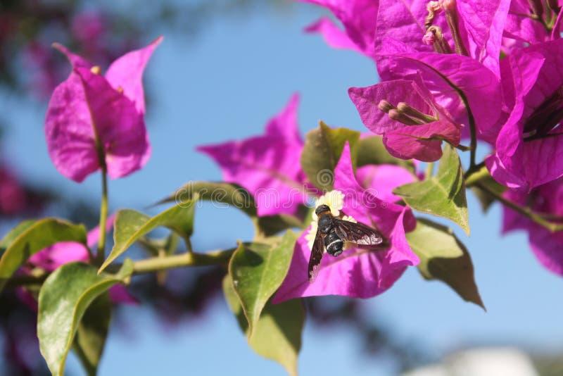 Honingbij met bloem royalty-vrije stock afbeeldingen