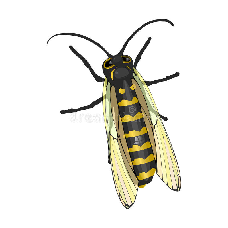 Honingbij op geïsoleerd wit stock illustratie