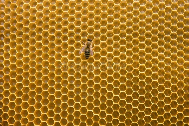 Honingraat stock afbeelding