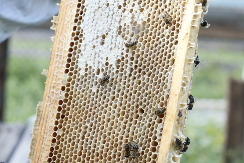 Honingraat stock afbeeldingen
