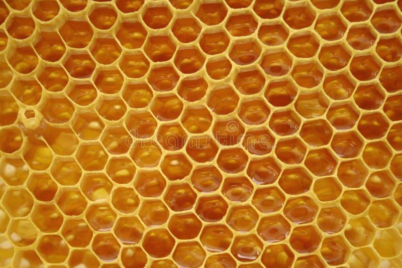 Honingraat, binnen de bijenkorf royalty-vrije stock foto's