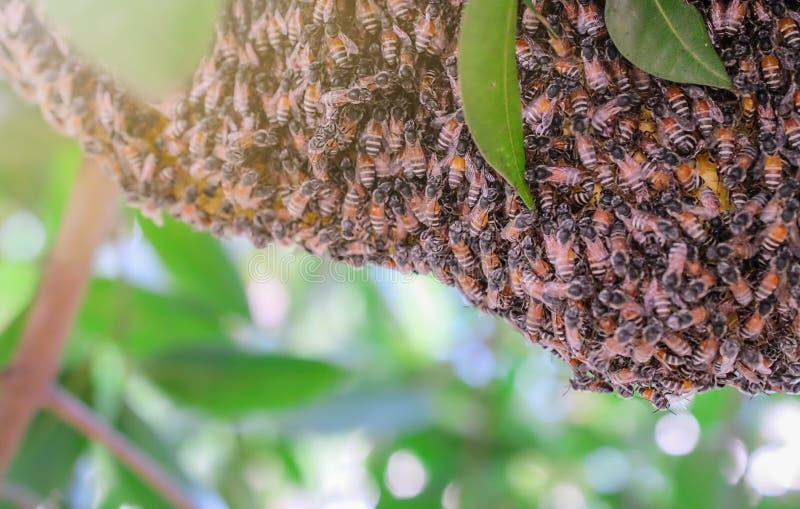 Honingraat dichte omhooggaand op achtergrond stock afbeeldingen