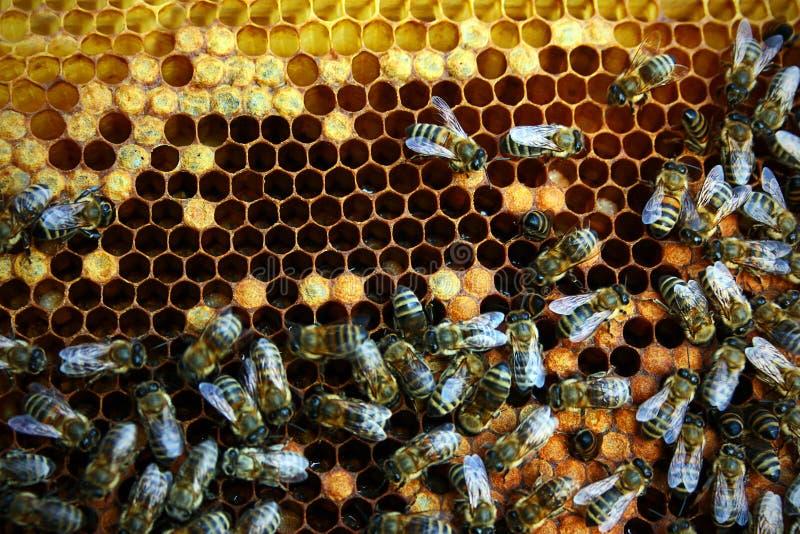 Honingraat met bijen stock fotografie