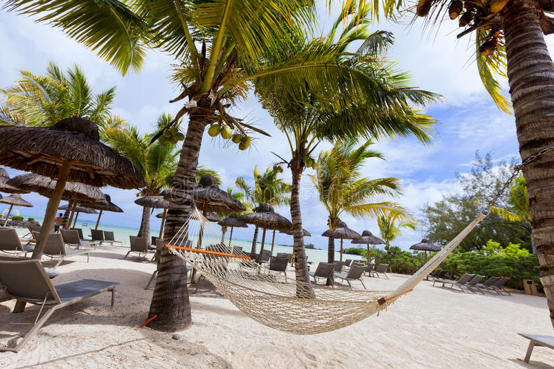 Honneymoon on tropical beach with palm leaf thatch roofing umbrellas and palm trees in the background. Luxurious vacations on Mauritius, honneymoon tropical royalty free stock photo