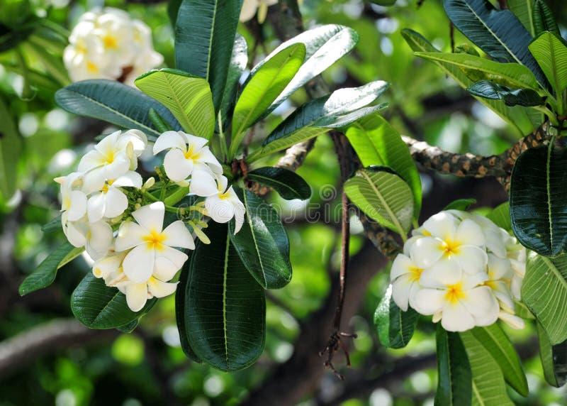 honolulu photo stock