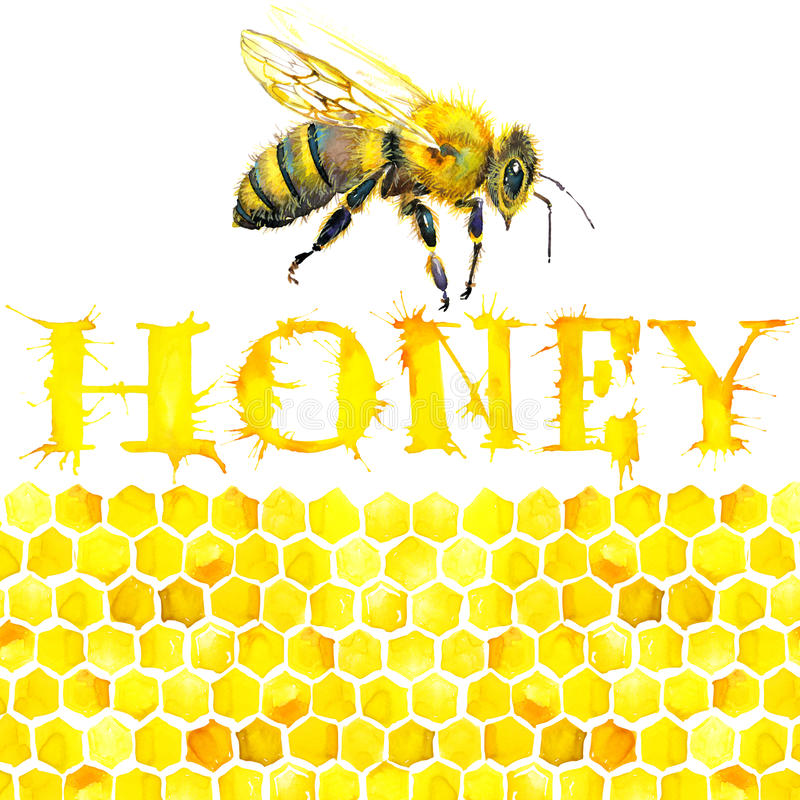 Honung honungskaka, sött bi vattenfärg royaltyfri illustrationer