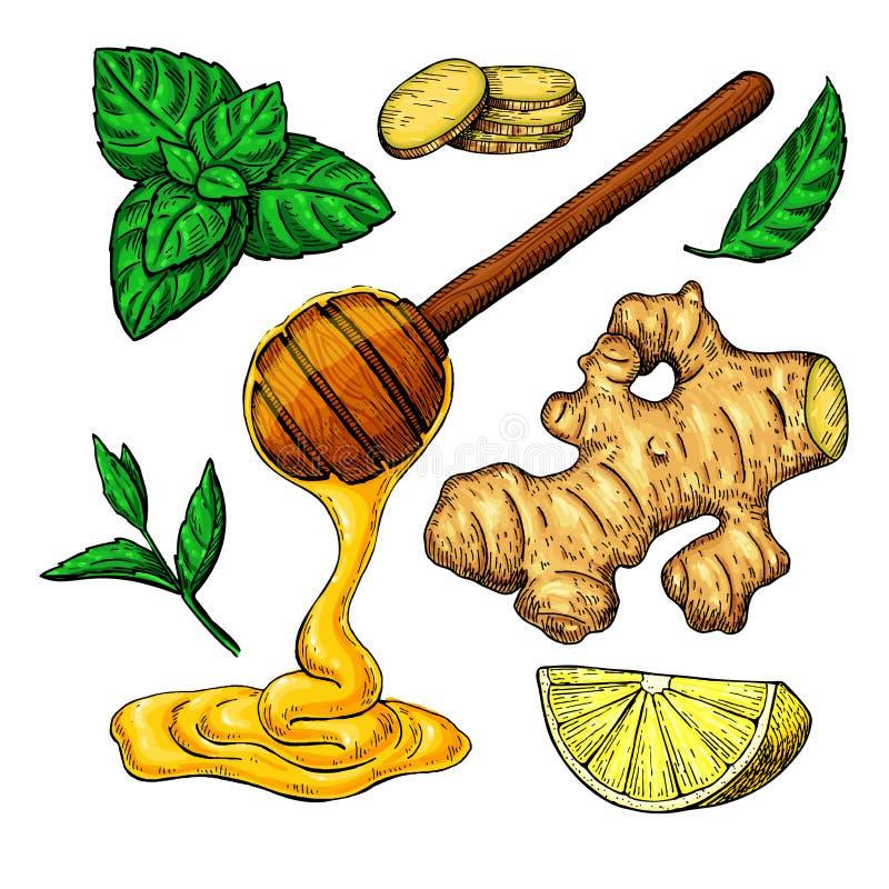 Honung-, ingefära-, citron- och mintkaramellvektorteckning skeda trä royaltyfri illustrationer