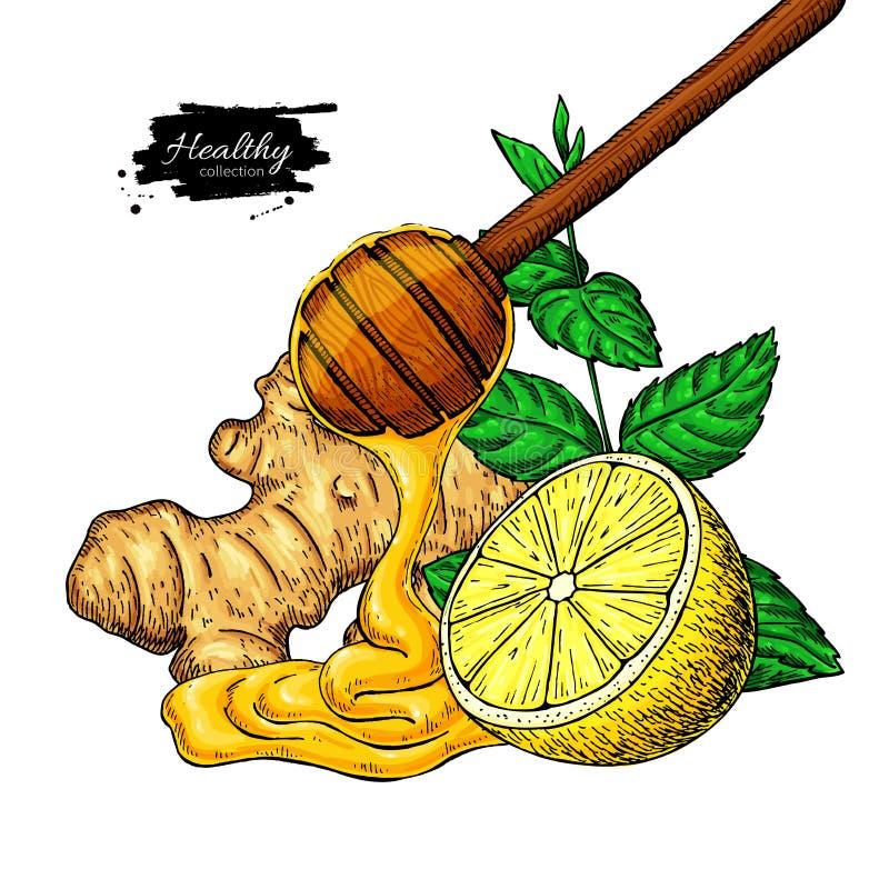 Honung-, ingefära-, citron- och mintkaramellvektorteckning Träsked, honungdroppe, hearb royaltyfri illustrationer