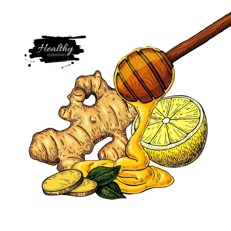 Honung-, ingefära- och citronvektorteckning Träskeden, honungdroppe, rotar, och fruktskivan skissar vektor illustrationer