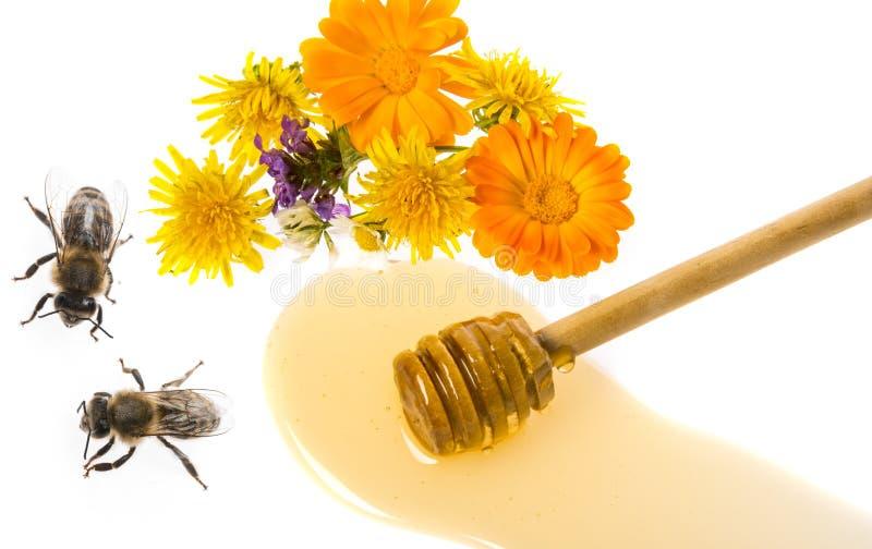 Honung och bin royaltyfria bilder
