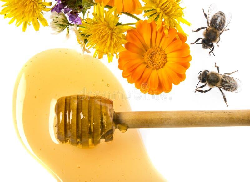 Honung och bin fotografering för bildbyråer