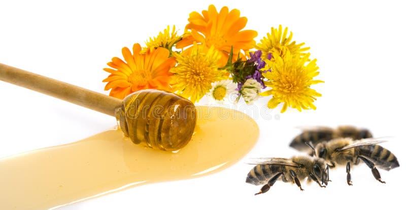 Honung och bin arkivbild
