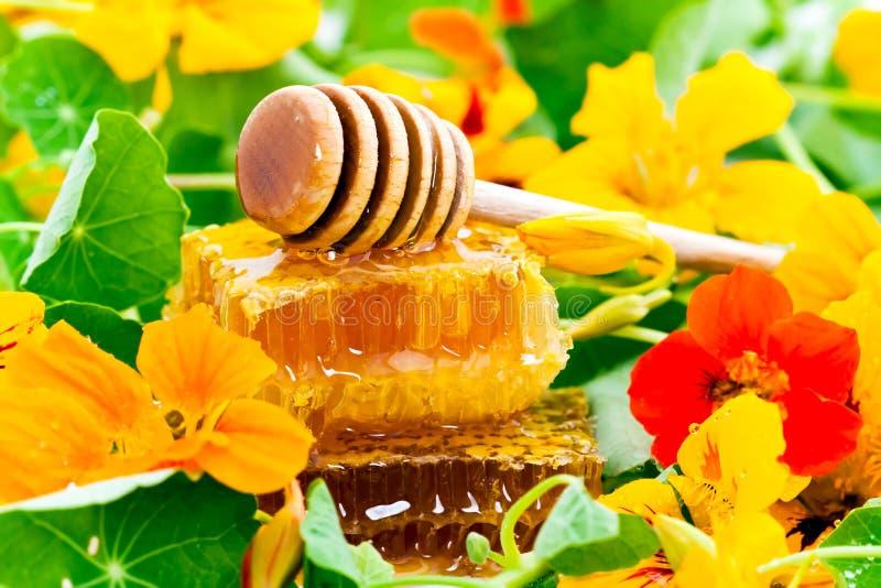 Honung och blommor arkivbilder