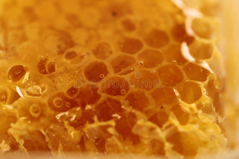 Honungbikupa arkivfoto