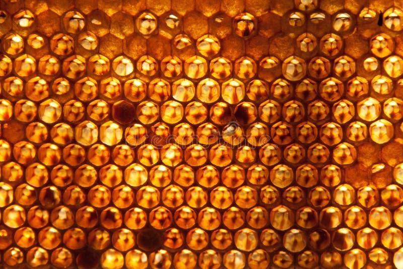 Honunghårkambakgrund eller textur royaltyfri foto