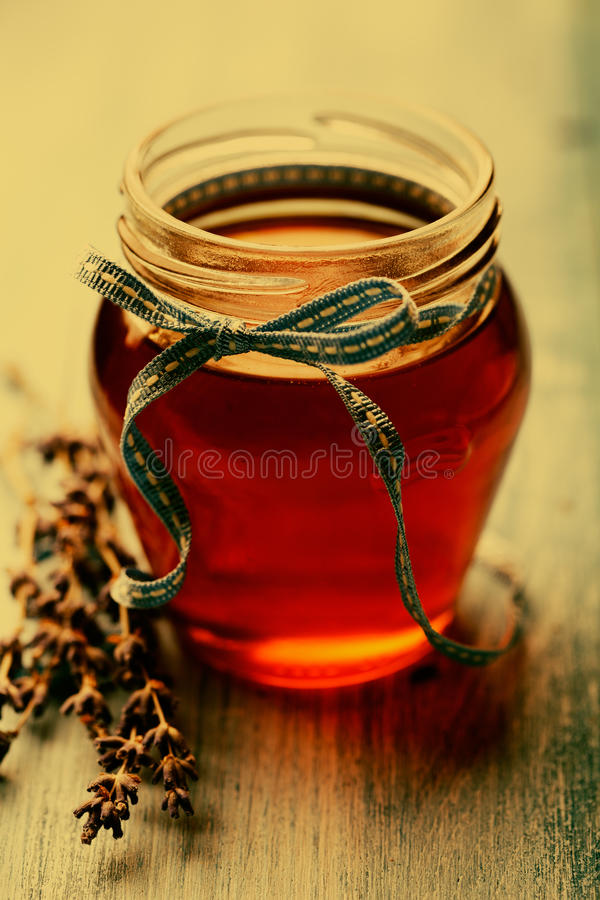 honunglavendel royaltyfri bild