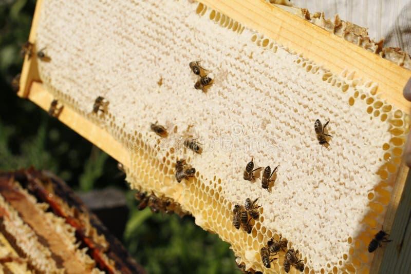 Honungskaka royaltyfria bilder