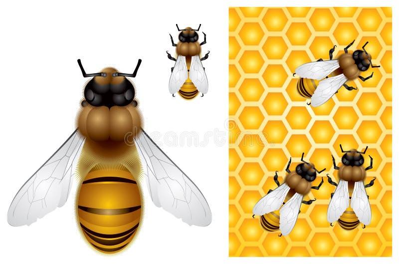 honungskaka för bakgrundsbihonung royaltyfri illustrationer