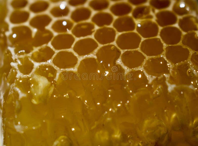 Honungskaka från som honungflöden arkivbild