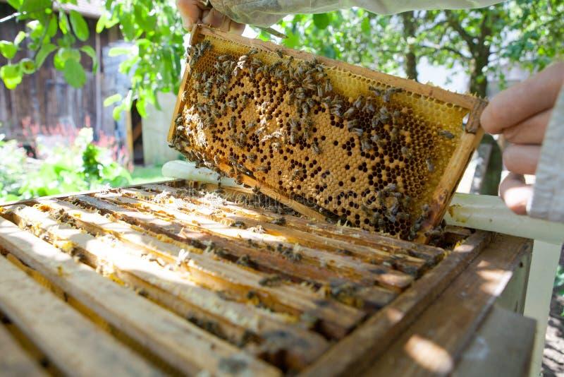 Honungskaka med bin och honung royaltyfri bild