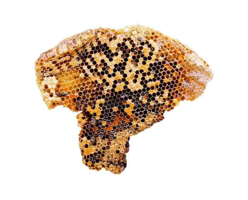 Honungskakaark med biet som isoleras p? vit bakgrund med urklippbanan royaltyfri foto