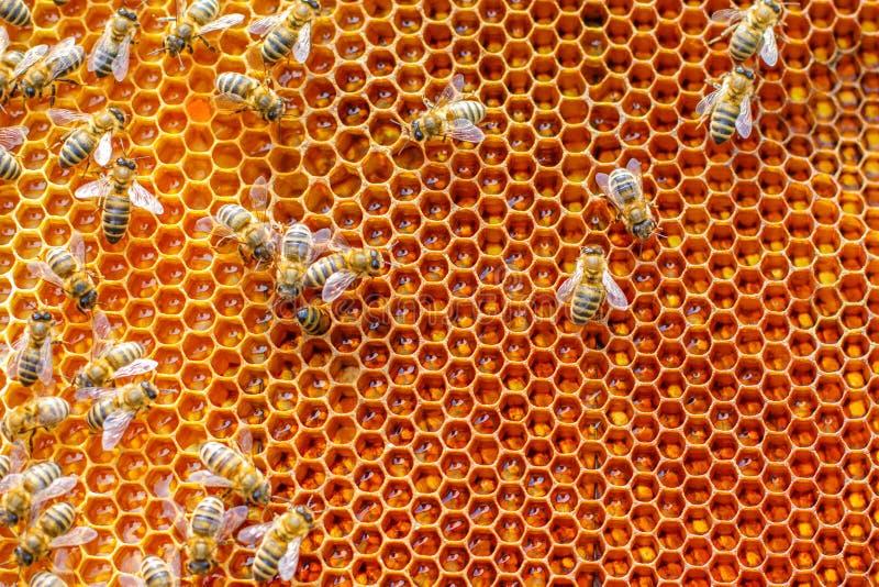 Honungskakabiillustration royaltyfria bilder