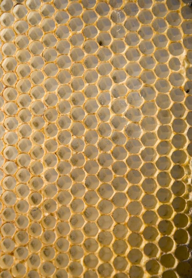 honungskakaingrepp fotografering för bildbyråer