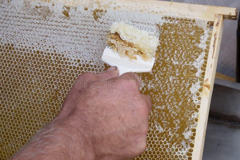 Honungskakan ska öppna för skördhonung arkivfoto