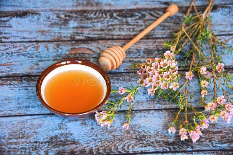 Honungskopa och manukaträd royaltyfri foto