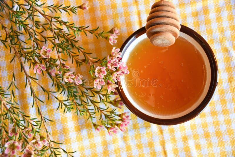 Honungskopa och manukaträd arkivbild