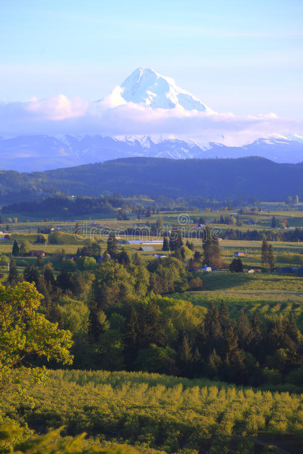 Hood River valley OR. & Mt. Hood. royalty free stock image