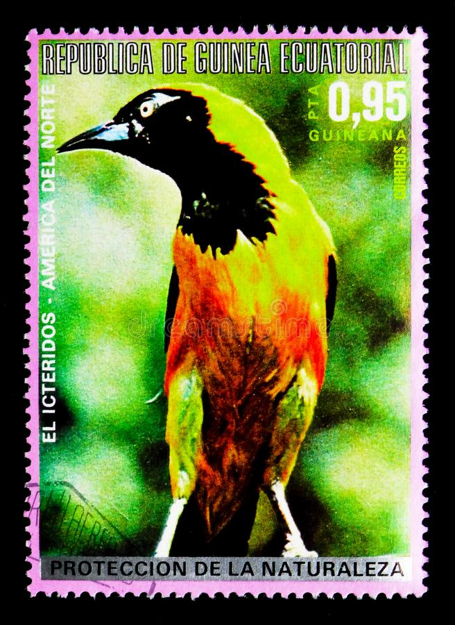 Hooded Oriole (Icterus cucullatus), North American birds serie. MOSCOW, RUSSIA - MARCH 28, 2018: A stamp printed in Equatorial Guinea shows Hooded Oriole ( stock photo