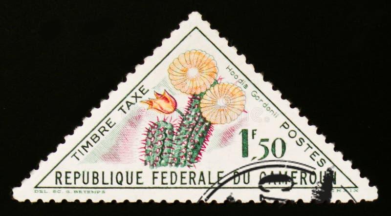 Hoodia Gordonii kwiat około 1963, obrazy royalty free