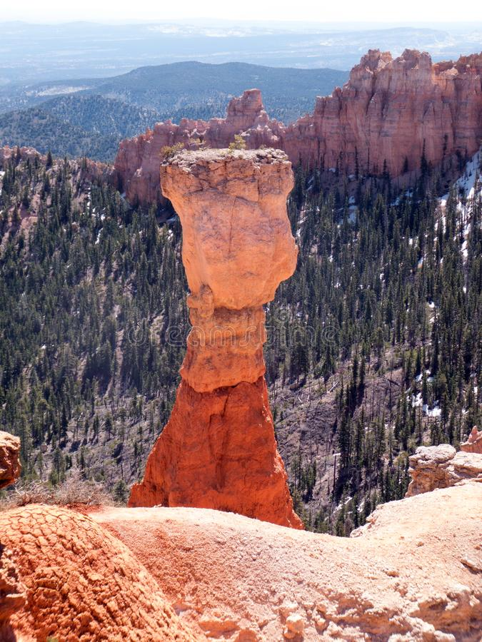 Hoodoo on High. Hoodoo, also known as tent rock, fairy chimney or earth pyramid, among Blue Spruce pine trees and rock formations at Ponderosa Point in Bryce royalty free stock photos