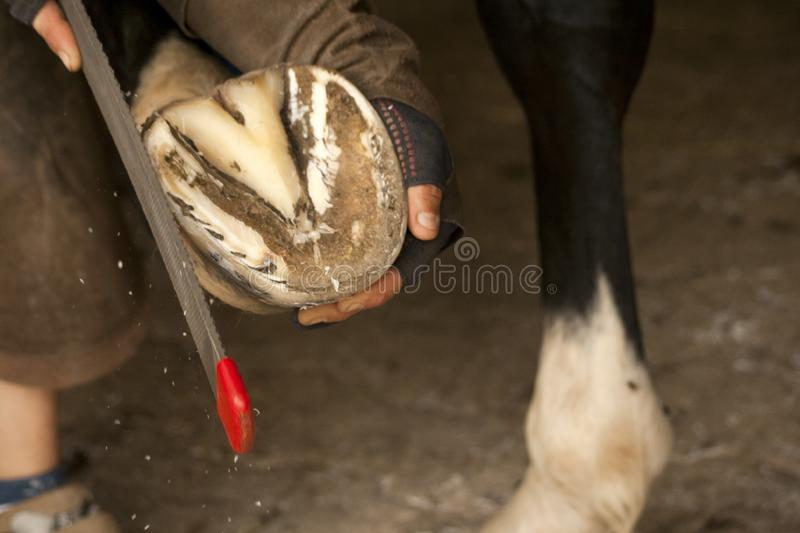 Hoofcare at horses foot, farrier at work on a barefoot horse vector illustration