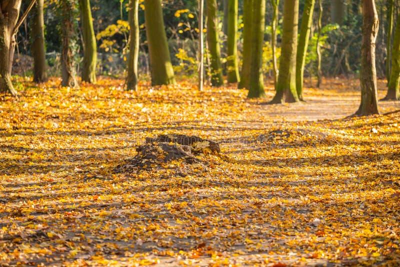 Hoofd beweging veroorzakend is oude bomen en boomstompen stock foto