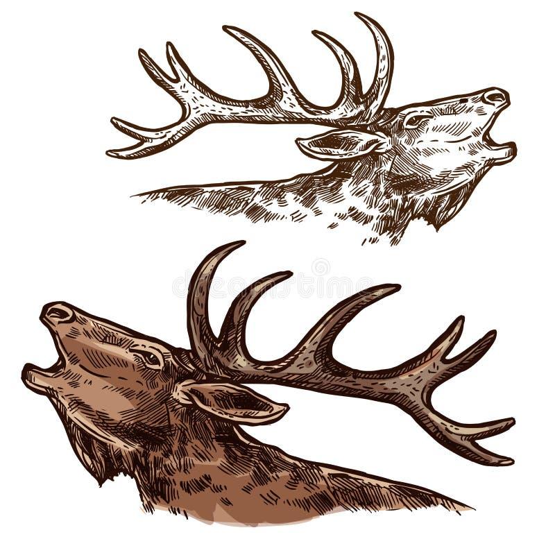 Hoofd de snuitvector geïsoleerde schets van elandenamerikaanse elanden vector illustratie