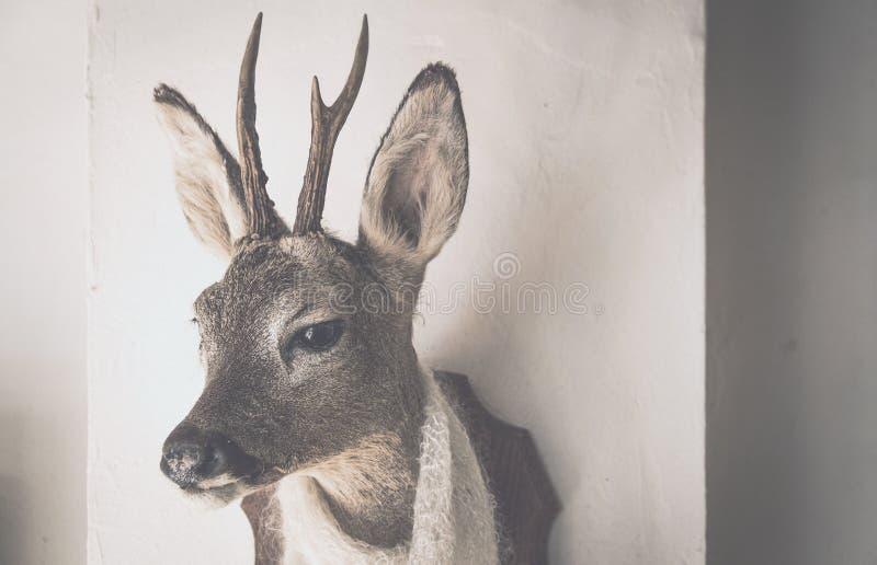 hoofd van een hert met een sjaal royalty-vrije stock afbeelding