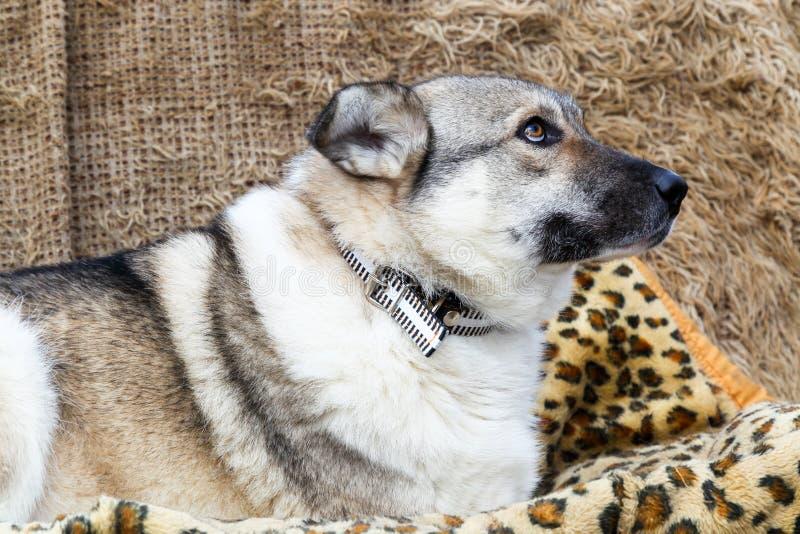 Hoofd van een hond stock foto's