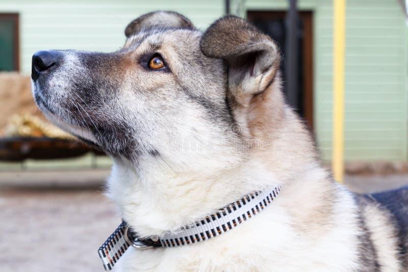 Hoofd van een hond royalty-vrije stock afbeelding