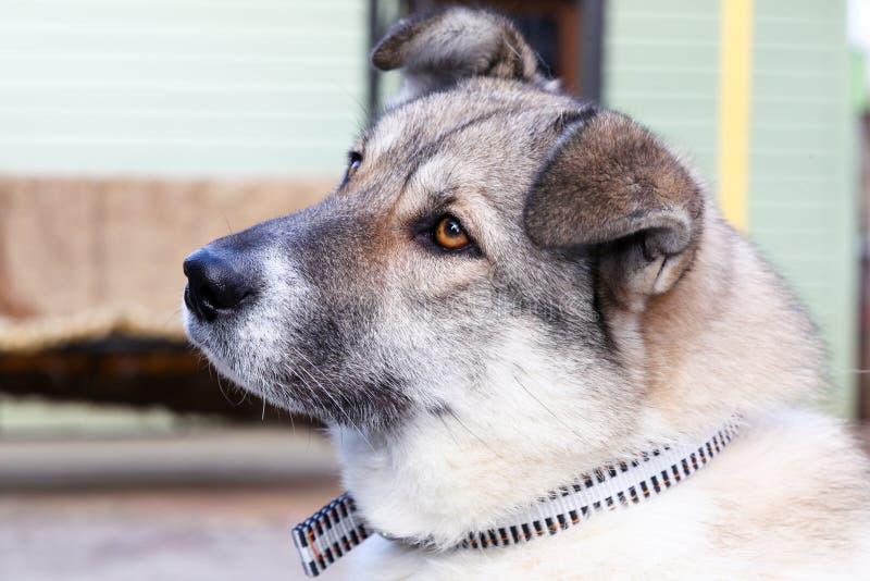 Hoofd van een hond royalty-vrije stock foto